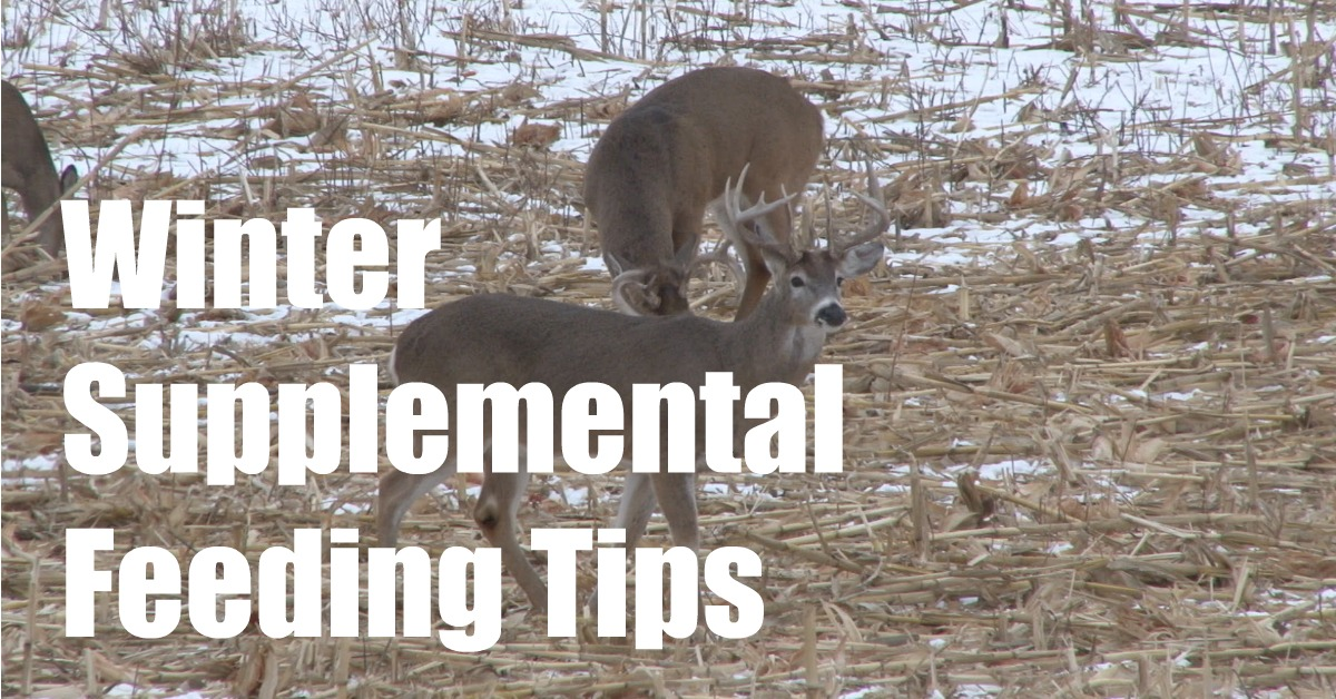 Winter Deer Supplemental Feeding Tips