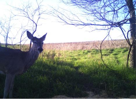 Deer Spring Nutrition