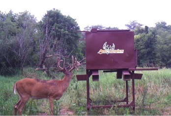 Whitetail Deer Feeder