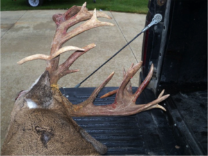 Buck Antler Trophy Whitetail