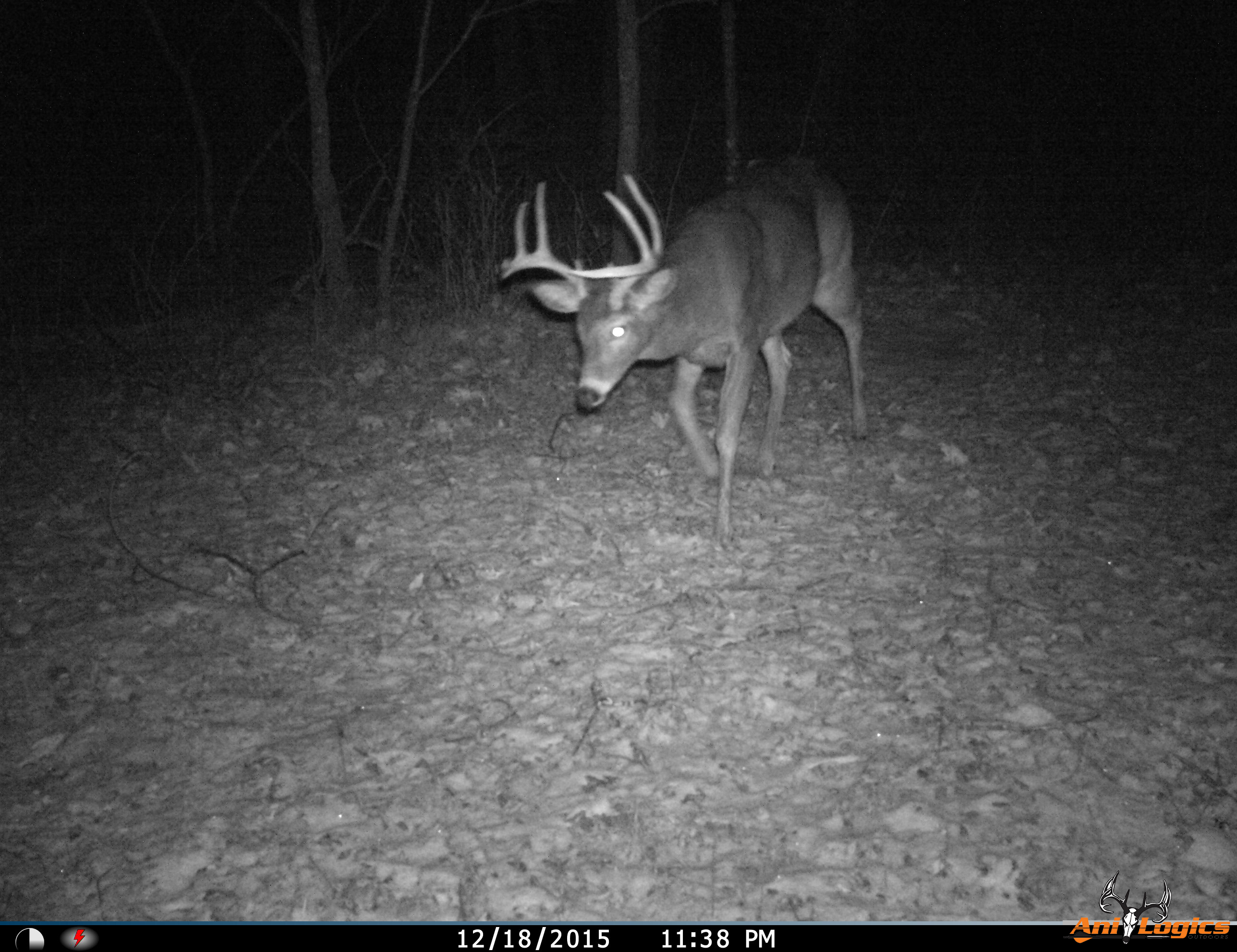 Whitetail Deer Trail Cam