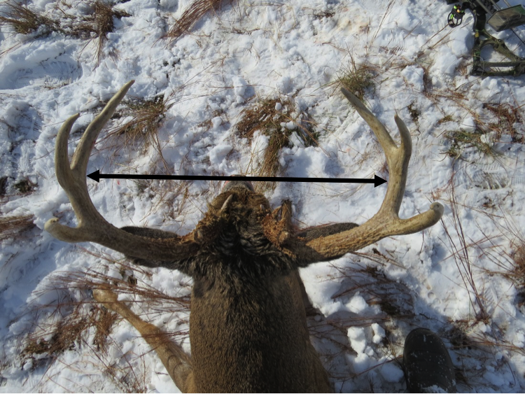 How to Score a Buck